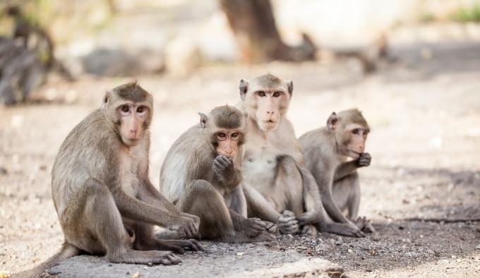 Ce stim sigur e ca maimuta e moarta in cotet