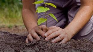 Vesti bune: Terra este mai verde decat acum 20 de ani